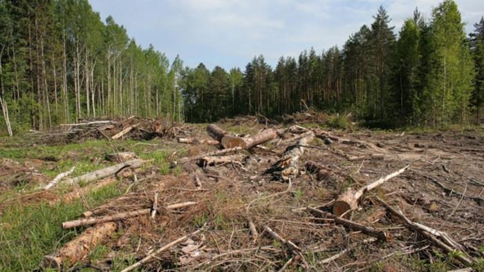 Хроника одного сражения за лес (Видео)