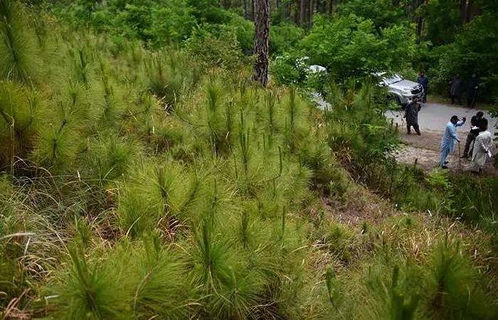 Как озеленяют засушливые холмы в Пакистане (+Фото)