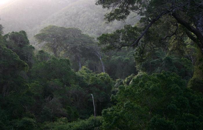 Многие крупные лесные массивы находятся на грани исчезновения! Вот 10 из них (+Фото)