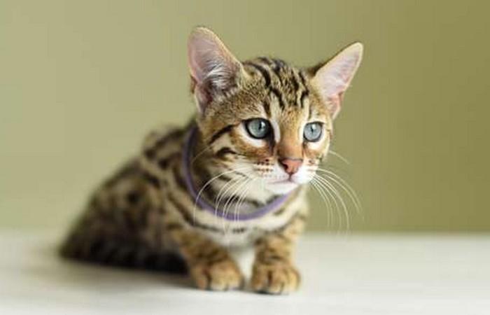 Малоизвестные факты о кошках - самых популярных домашних питомцах (+Фото)