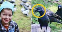 Девочка подкармливала ворон и они отблагодарили ее за любовь (Видео)
