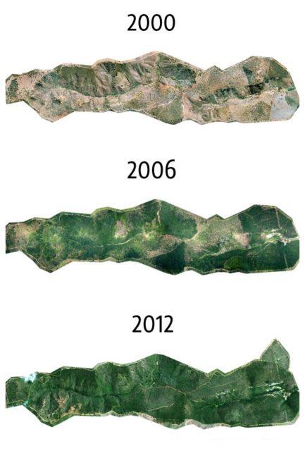 Фотограф и его семья за 20 лет посадили 2 миллиона деревьев
