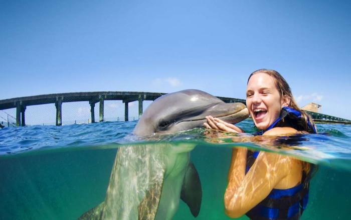 Дельфин любит поцелуи (Видео)