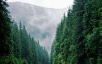 В России подписан закон,который запрещает сплошные вырубки лесов