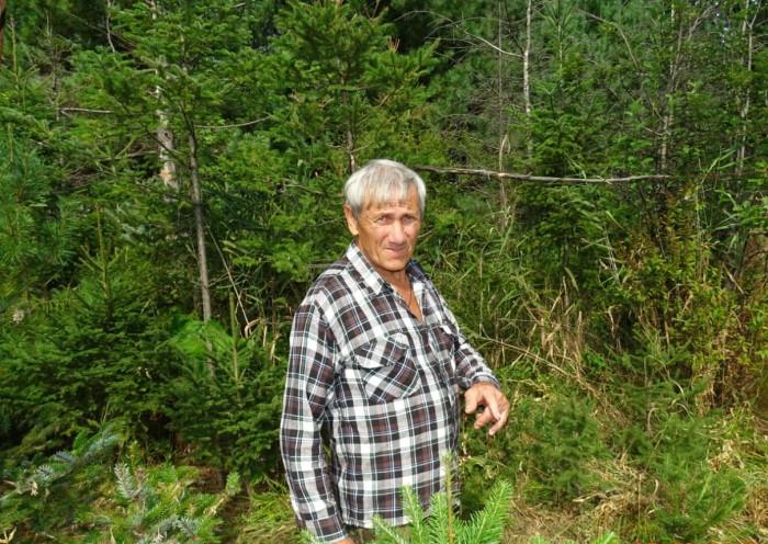 Педагог сам почти тридцать лет высаживает саженцы хвойных деревьев