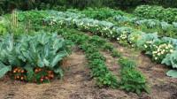 Главные секреты умного огорода Замяткина