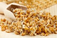 Почему йоги советуют проросшее зерно?