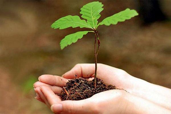 Полное руководство по выращиванию дубов в домашних условиях