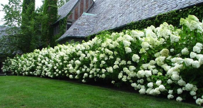 Как создать красивую живую изгородь?