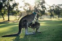 Австралия собирается посадить миллиард деревьев