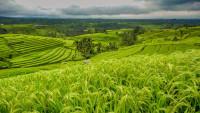 Беспахотное земледелие - основа земледелия древностиБеспахотное земледелие - основа земледелия древности