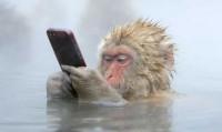 Обезьяна и айфон - эволюция животных или деградация человека? (Видео)