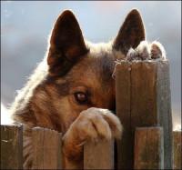 Разговаривать надо - история о верной собаке и о любви