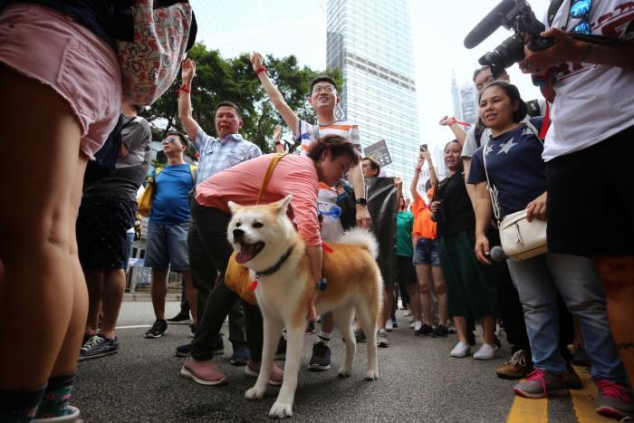 В Китае прошла демонстрация в защиту прав животных