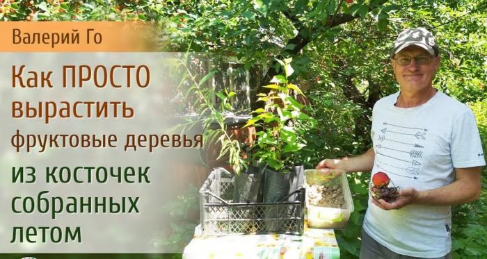 Как просто вырастить дерево из фруктовой косточки (Видео)