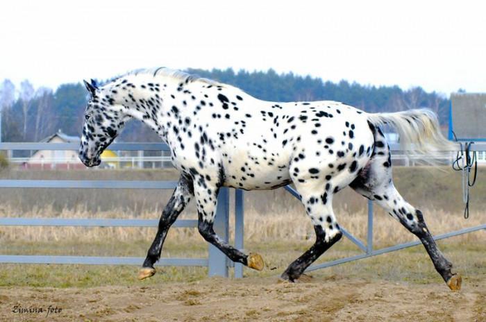 Невероятно красивые лошади со всей Планеты (Фото)