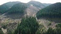 Лес, которого больше нет! Уничтожили... (Видео)