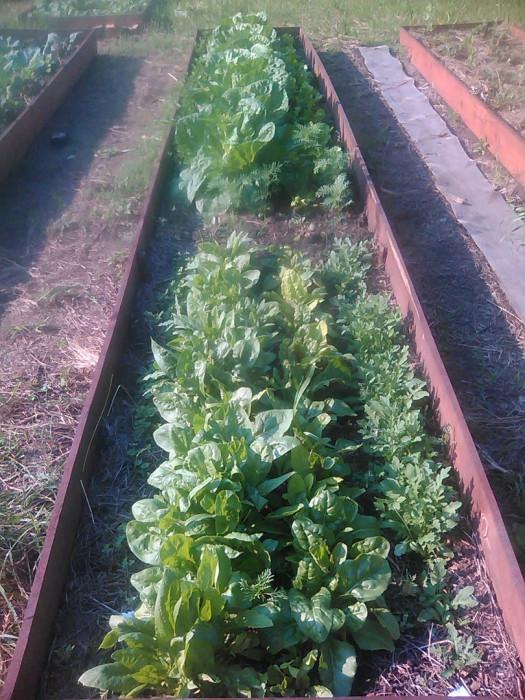 Как создать урожайный огород в каждый год? (+Фото)