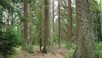 Как вырубать лес без ущерба для природы? (Видео)