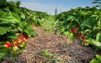 Универсальный метод земледелия - пермакультура (Видео)