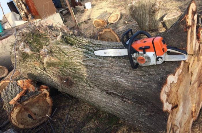 Депутат: ДПМ делала большие деньги на незаконной вырубке лесов