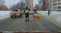 Челябинский полицейский помог хромой собаке перейти дорогу (Видео)