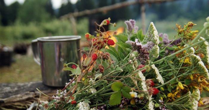 30 растений и трав для чая