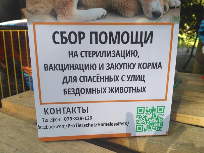 В Кишиневе появились люди, спасающие бездомных животных – волонтеры Adopt Me Fest (+Фото)