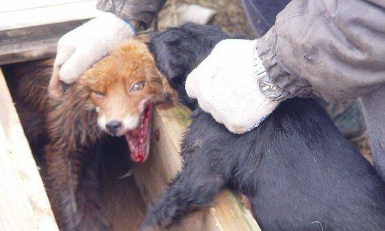 Люди творят на земле Ад, истязая животных (+Фото)