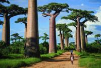 Красивейшие деревья на Земле (Видео)