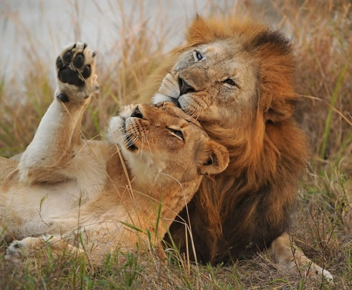 Созидание и любовь — вот законы Природы, которые движут все живое
