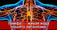 Лимфаденит: 80% того, что мы делаем, вредит нашему здоровью