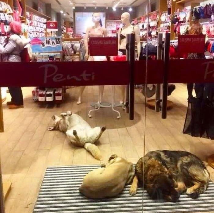 В Турции собак и кошек пускают в магазины на ночь (+Фото)