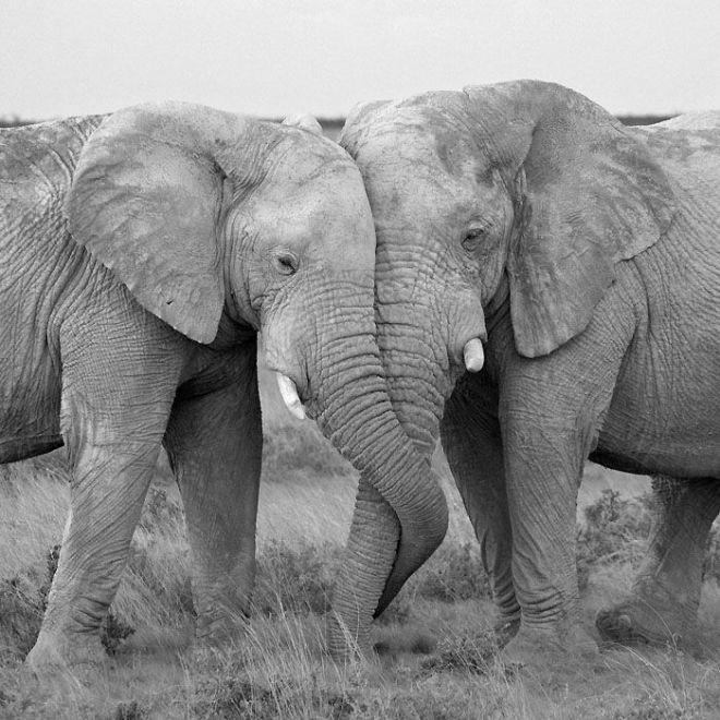 Созидание и любовь — вот законы Природы, которые движут все живое (Фото)