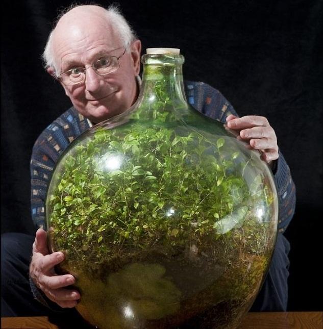 Невероятно! Это растение много лет живёт в бутылке и само себя обеспечивает и воздухом и едой и водой...