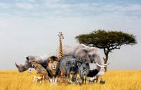 Человечество уничтожило 60% животных на планете