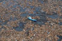 В Тихом океане может находиться 2 мусорное пятно (Видео)