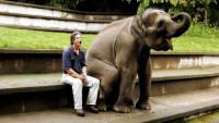 Ах, эти слоники... (Видео)