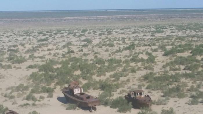 Узбекистан планирует покрыть все дно высохшего Аральского моря саксаулами