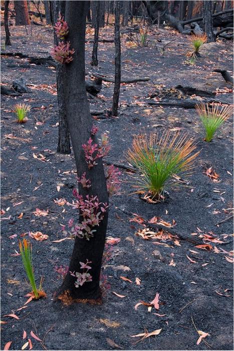 В Австралии леса начали восстанавливаться после ужасных пожаров (+Фото)