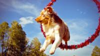 Собака каскадер (Видео)