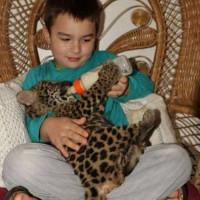 Мальчик из Бразилии, живущий с ягуарами (Фото)