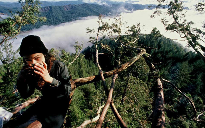 Девушка прожила два года на дереве, чтобы защитить его (Фото)