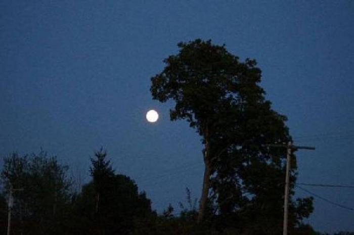 Фантастические фото деревьев, которые выглядят словно герои сказок и мульфильмов!