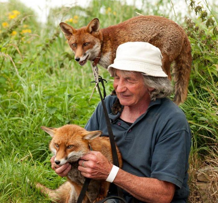 Мужчина спас двух лис, и теперь они влюблены в него (Фото)