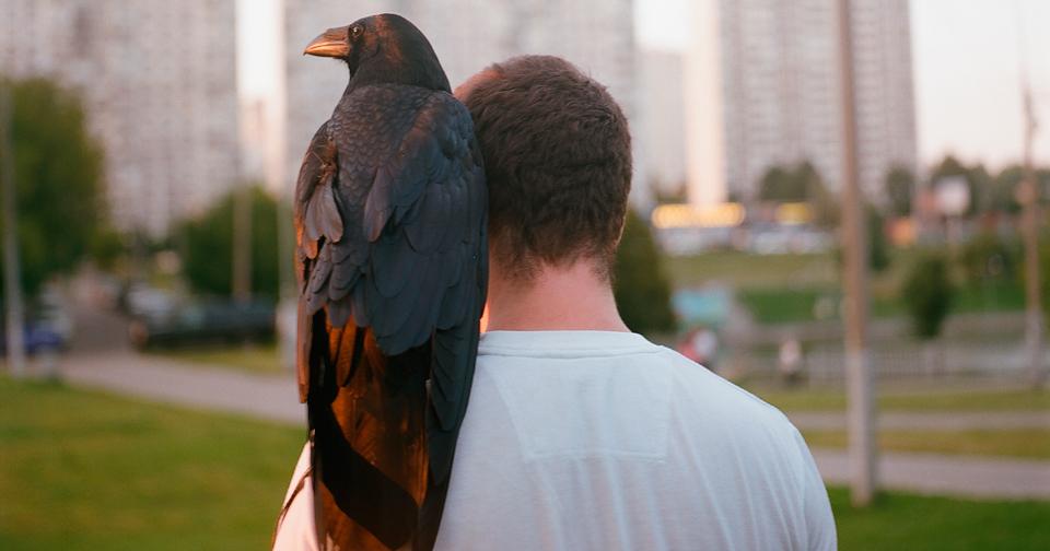 Un bărbat, prieten cu un corb (Video)