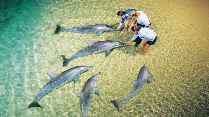 B Aвcтрaлии ecть пляж, гдe coбирaютcя люди и дeльфины, чтoбы пooбщaтьcя друг c другoм (Фото)