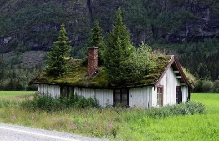 Природа всегда выигрывает против цивилизации (Фото)