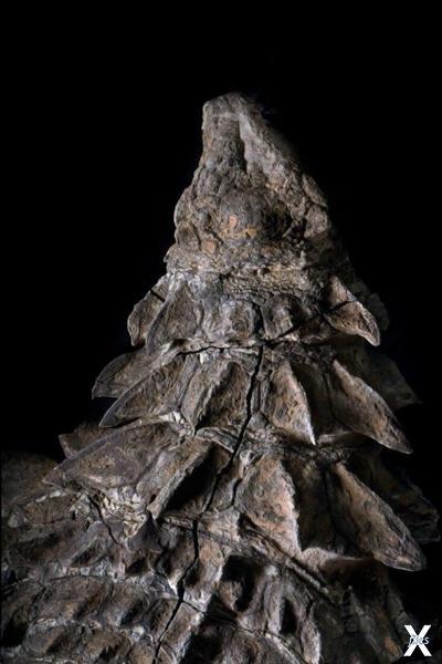Уникальная находка ученых — мумия динозавра (+Фото)