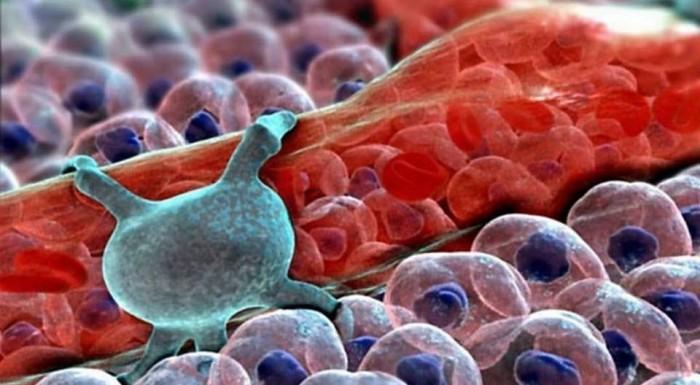 Как выглядят здоровые клетки нашего тела? (Фото)